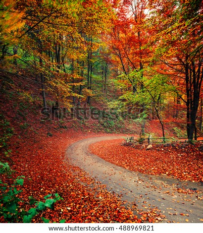 Colorful autumn scene in the mountain forest. Mystical dark view in mountain forest, Ukraine, Europe. Travel concept background.