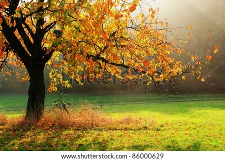 Colorful autumn tree brightened with direct sun beams - stock photo