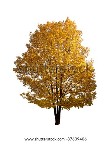 Colorful Autumn tree isolated on white - stock photo