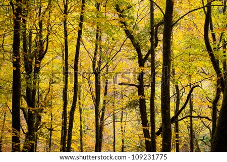 Colorful autumn trees background