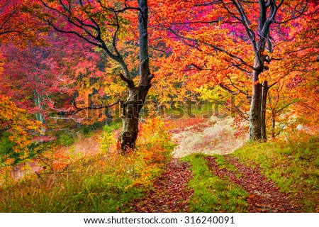 Colorful autumn trees in forest. Carpathian, Ukraine, Europe. Toning effect.