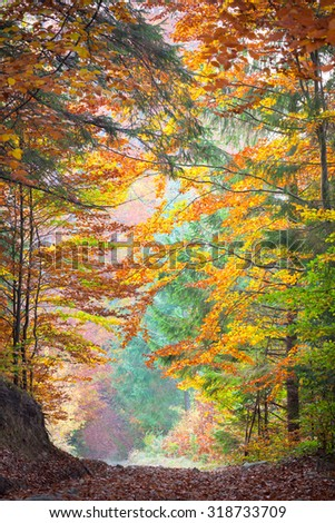 Colorful Autumn Trees in the silent park - Beautiful Fall season - stock photo