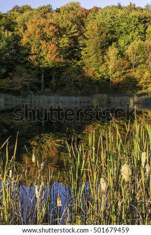 Colorful Autumn trees reflected on Cattail lined Snake Pond on the Shaverton Trail near Andes in the Catskills Mountains of New York.