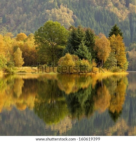 colorful autumn trees - square background