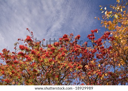 colorful autumn trees with a blue sky