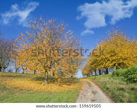 Colorful autumn trees with fallen leaves framing a small rural country road  - stock photo