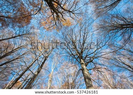 Colorful autumn treetops of a beech forest on a blue sky background