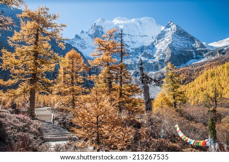 Colorful autumn with mt. Chenrezig  in Yading national level reserve, Daocheng, Sichuan Province, China.