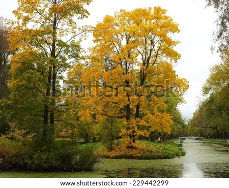 Colorful autumn yellow tree on the island on the pond, Catherine Park in Tsarskoe Selo, St. Petersburg, Russia.  - stock photo