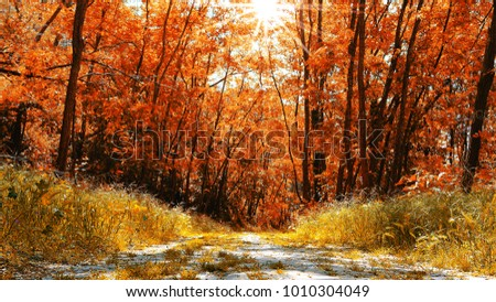 Colorful autumnal background. Pathway crossing the forest.