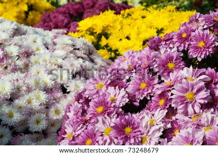 Colorful autumnal flowers background - stock photo