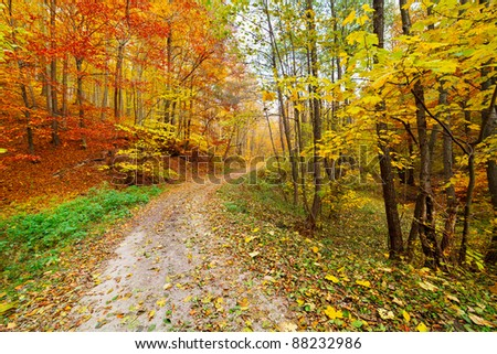 Colorful autumnal landscape with deciduous forest and many fallen leaves - stock photo
