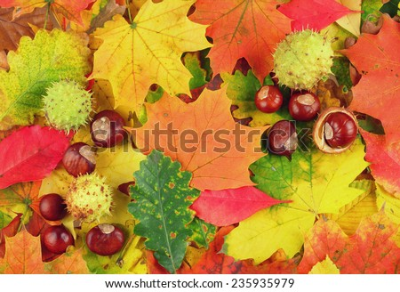 Colorful background made of fallen autumn leaves and chestnuts - stock photo