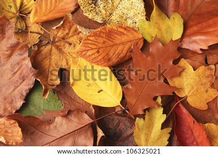 Colorful background of autumn leafs - stock photo