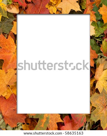 Colorful background of autumn leaves - stock photo