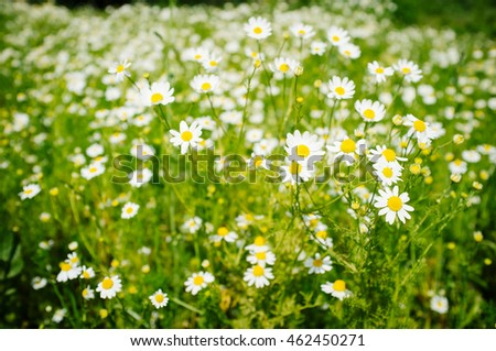 colorful background of wild flowers in spring