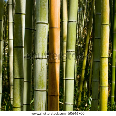 Colorful Bamboo Trunks in Sunlight - stock photo