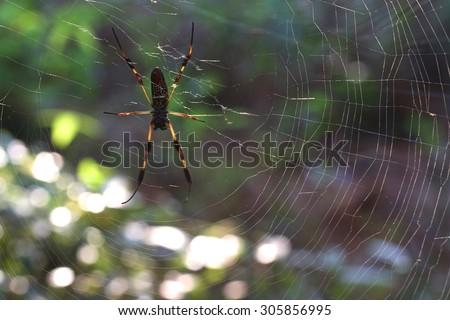 Colorful banana spider in deep woods of south carolina - stock photo