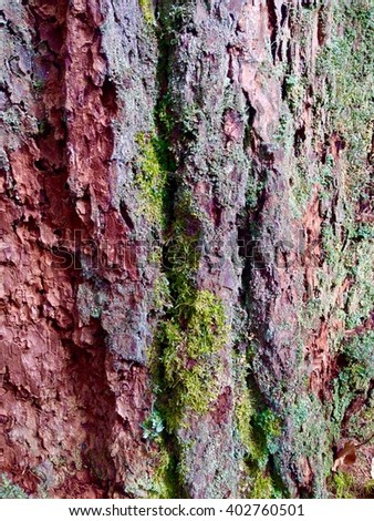 Colorful bark of a tree