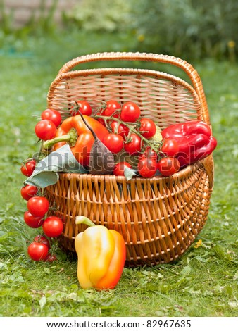 Colorful basket with different fresh organic vegetables