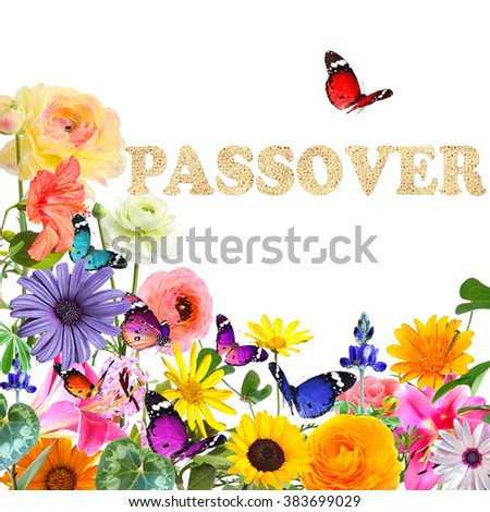 Colorful beautiful flowers,butterflies and word Passover made of Matzoh (matzah or matzo) traditional Jewish dry bread for Passover holiday.Spring nature abstract holiday background.Isolated on white  - stock photo
