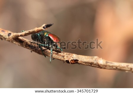 Colorful horned beetle - photo#23