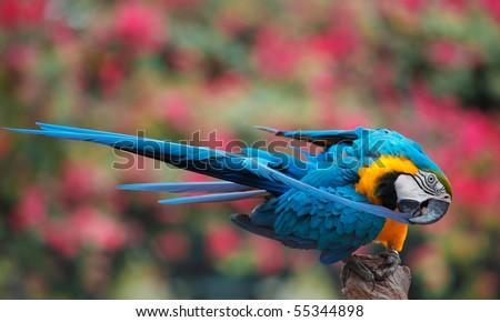 colorful bird - stock photo