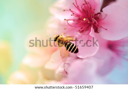 Colorful Blooms and honey bee - stock photo