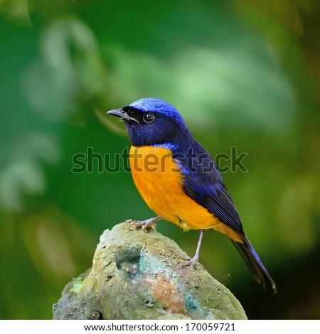 Blue and orange bird logo - photo#11
