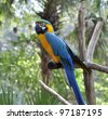 Colorful Blue Parrot Macaw ,Sitting On A Branch - stock photo