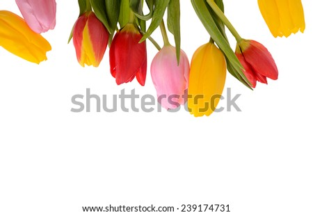 Colorful bouquet of fresh spring tulip flowers isolated on white background. - stock photo