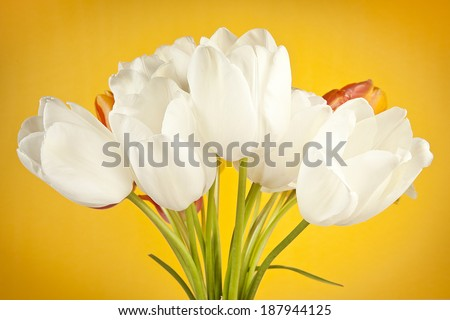 colorful bouquet of fresh spring tulip flowers on yellow background - stock photo