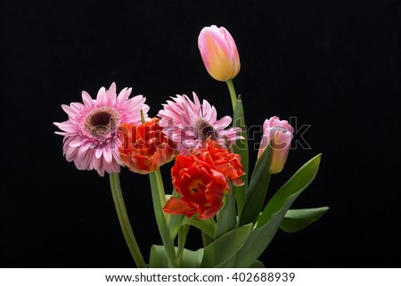 colorful bouquet of fresh spring tulips and gerbera flowers - stock photo