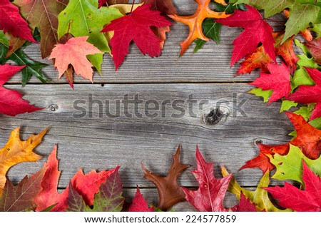 Colorful bright autumn leaves bordering on rustic wooden boards - stock photo