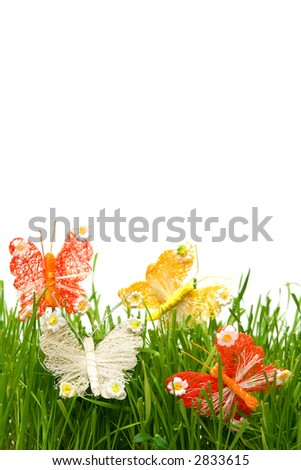 Colorful butterflies in the grass on a white background