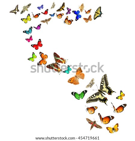 Colorful butterflies. Isolated on a white background. Wildlife. Insects and Colors in the Nature