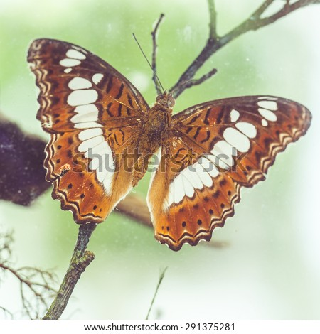 colorful butterfly - stock photo