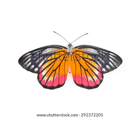 colorful Butterfly flying Isolated on white background.