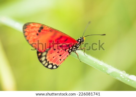 Colorful butterfly in green field - stock photo