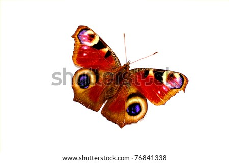 Colorful butterfly isolated on white background - stock photo