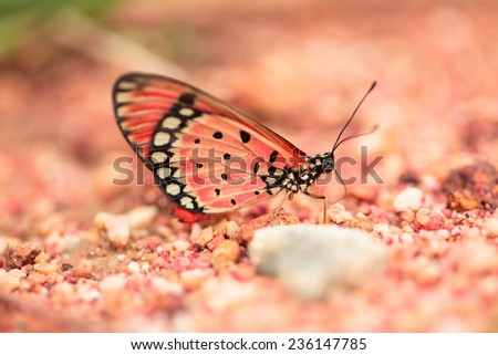 Colorful  butterfly on brown sand - stock photo