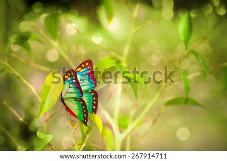 Colorful butterfly on the branch - stock photo