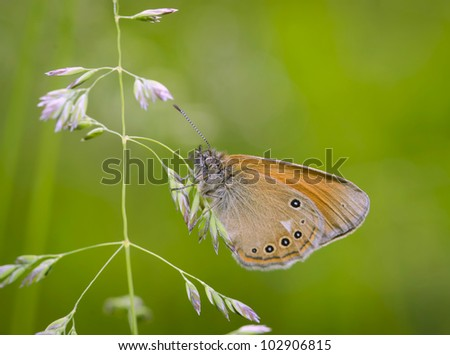 Colorful butterfly resting on grass