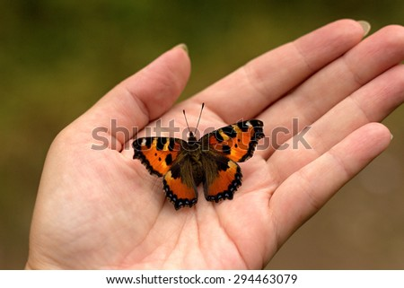 colorful butterfly sitting on the palm - stock photo