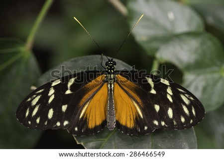 Colorful butterfly standing over a leaf in a cloudy day - stock photo
