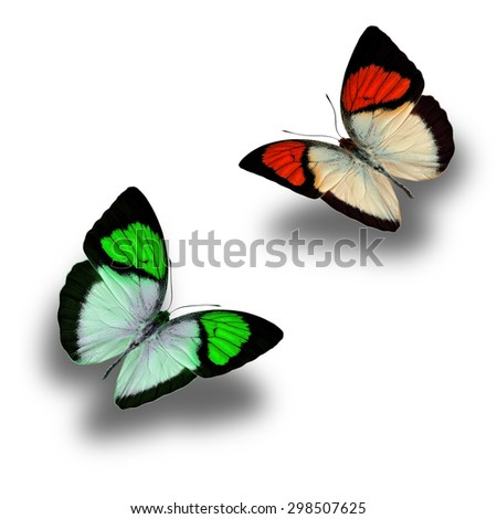 Colorful butterfly upper wing profile flying up