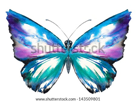 Colorful butterfly watercolor painted isolated on white background - stock photo