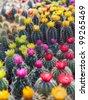 Colorful cactus - stock photo