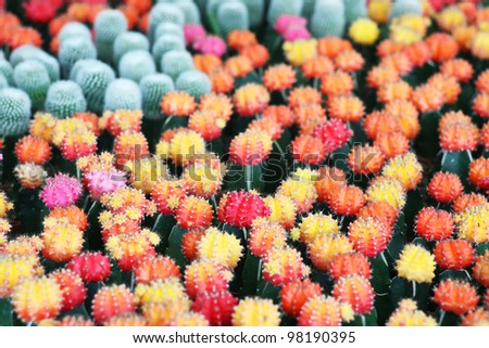 colorful cactus. - stock photo