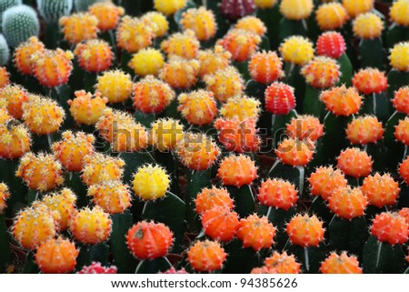 colorful cactus background. - stock photo